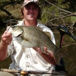 53cm Clarence River Bass